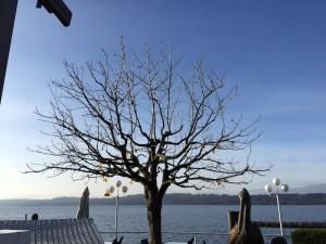 Gartenstars_Baumpflege_4
