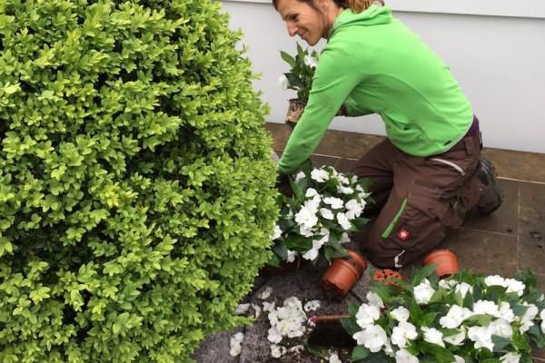 Gartenstars_Dachterrassenpflege_3